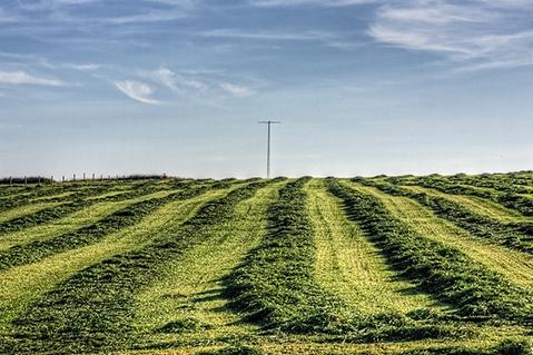 Pamiętajmy - trawy wylęgają i jeżeli tak się stanie, trzeba je kłosić z włosem.